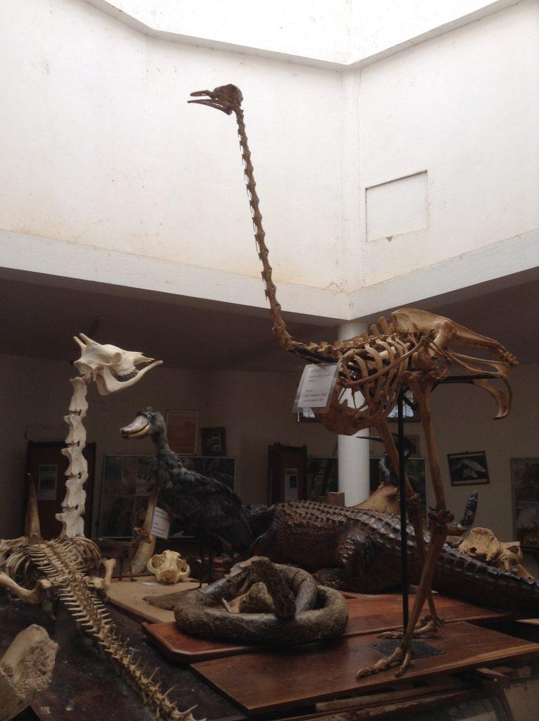 骨格標本_2